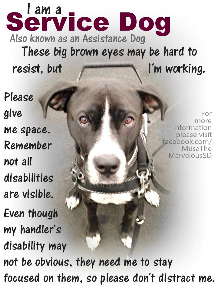 Do Dogs Get Ptsd