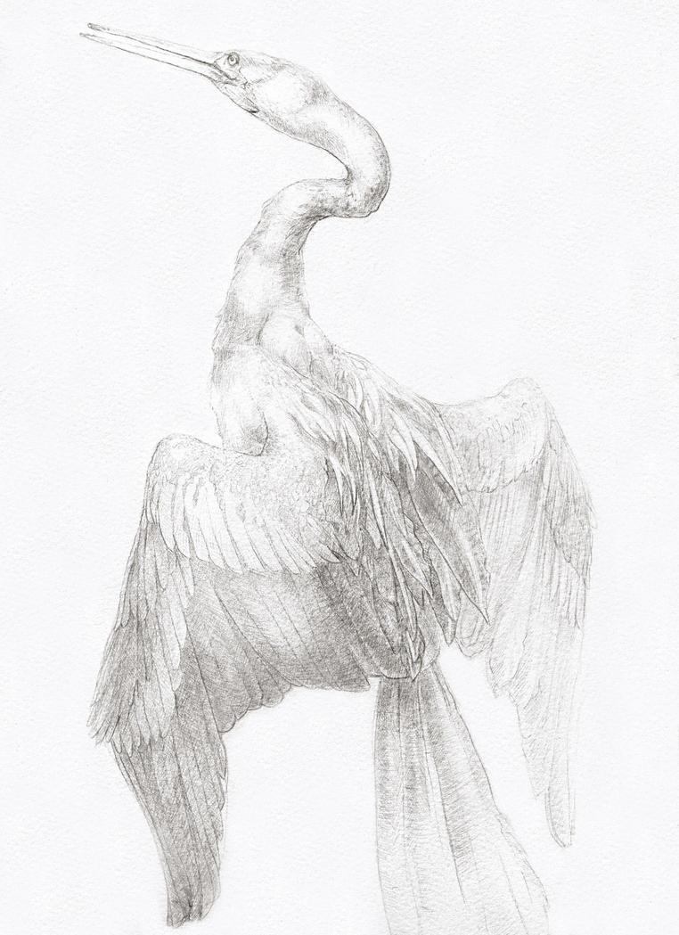 Silverpoint Cormorant by KlakKlak