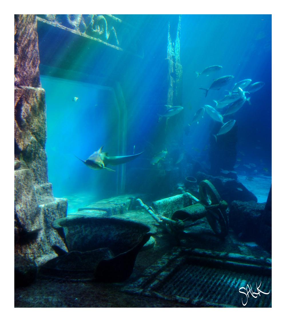 Atlantis Aquarium Bahamas By Almightyblah On Deviantart