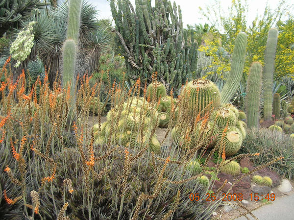 external image cacti_forest_by_radjess331.jpg