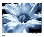 flowers01 - purity