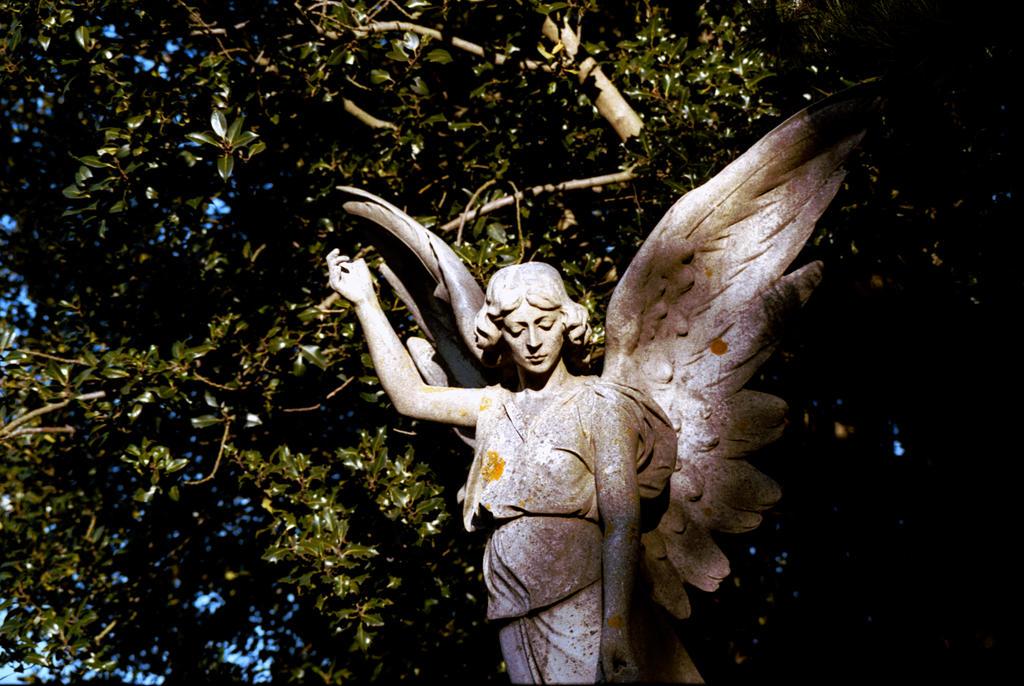 Angel 03 by rotellaro