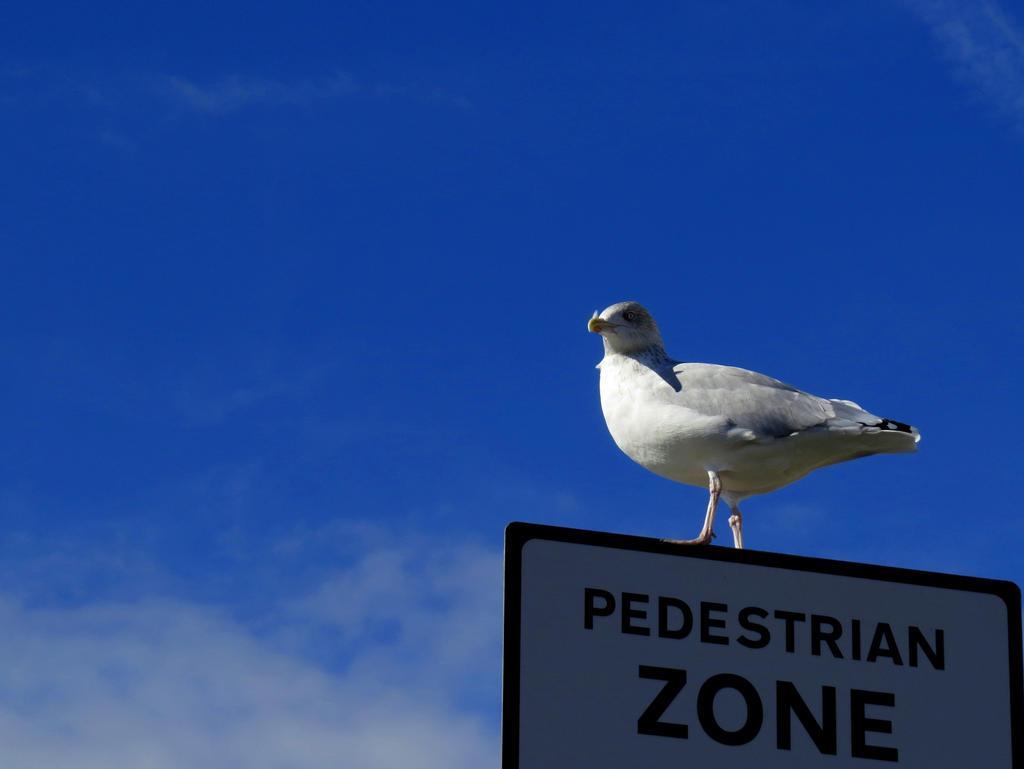 Pedestrian seagull by rotellaro