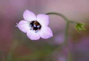 kwiatuszek by efeline