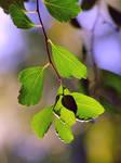 leaves by efeline