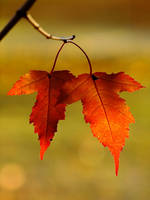 autumn love by efeline