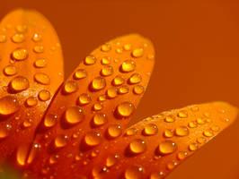 .:orange:. by efeline