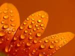 .:orange:.
