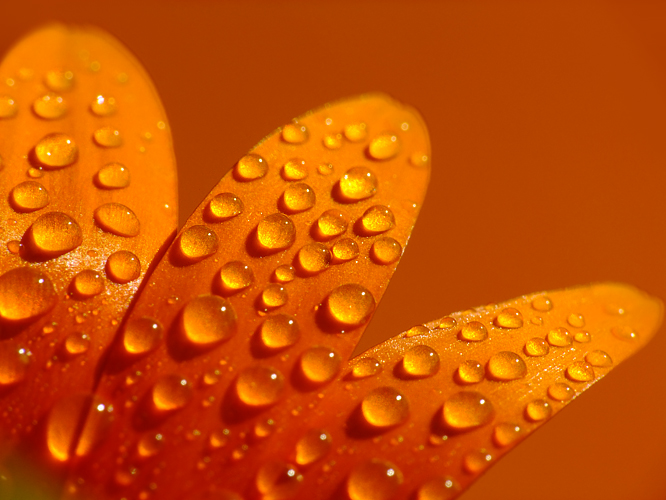 .:orange:. by efeline