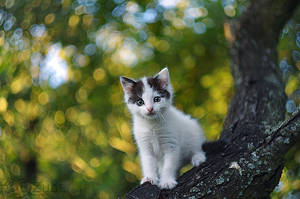 kitty on the tree by efeline