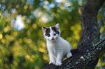 kitty on the tree