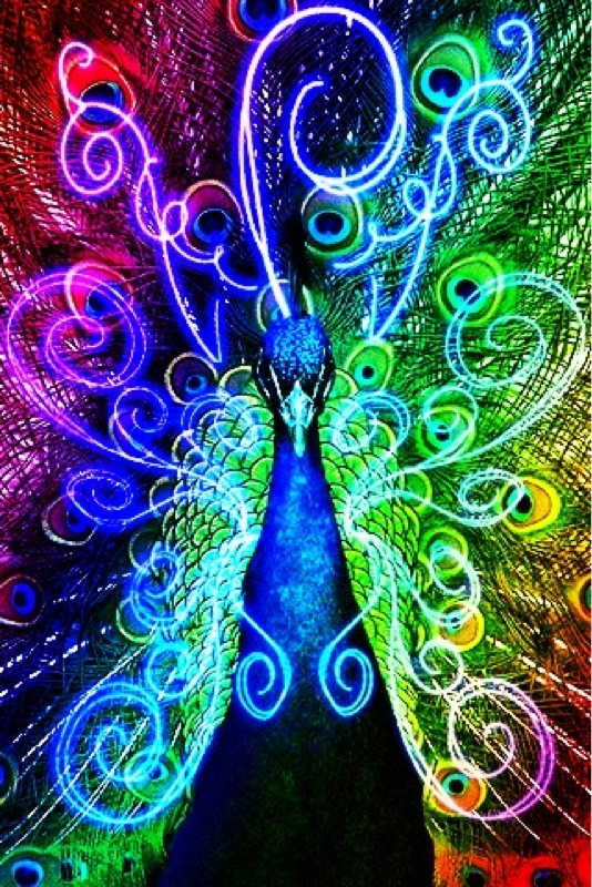neon peacock wallpapers - photo #17