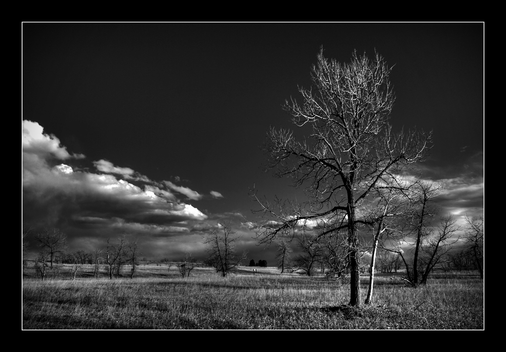 The Calling Tree bw by craigory