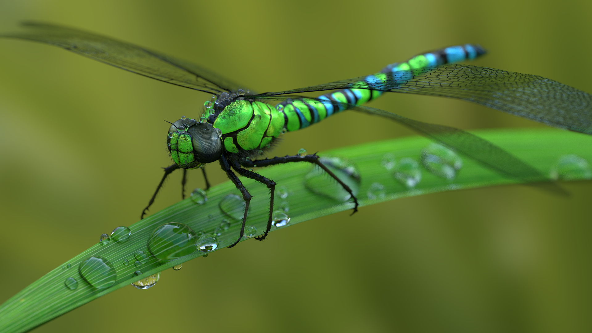 dragonfly by frequenzlos