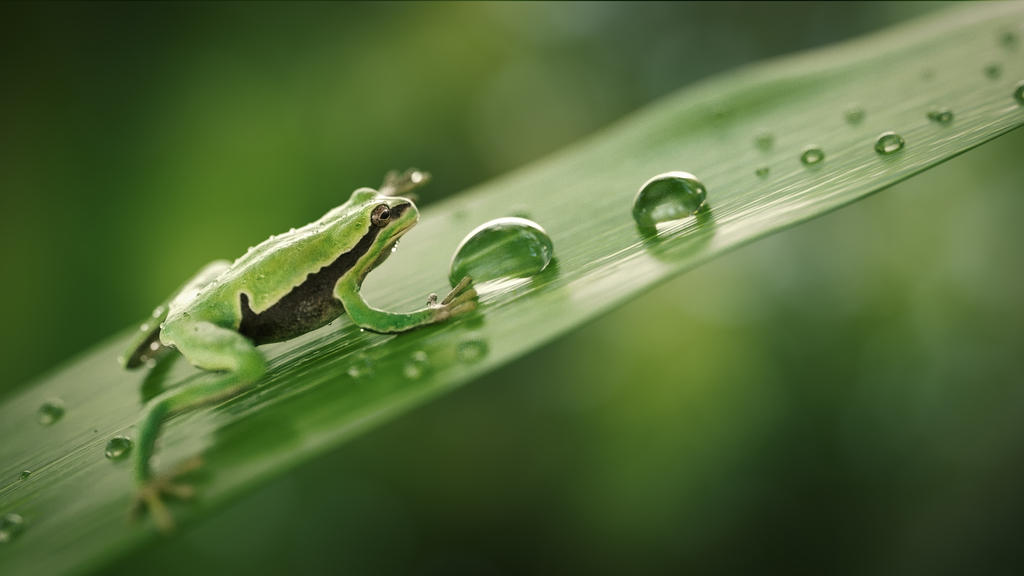 Frog by frequenzlos