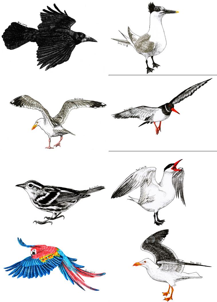 Birds Flying Tumblr
