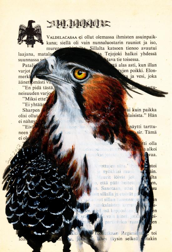 Ornate Hawk-Eagle by Solinni