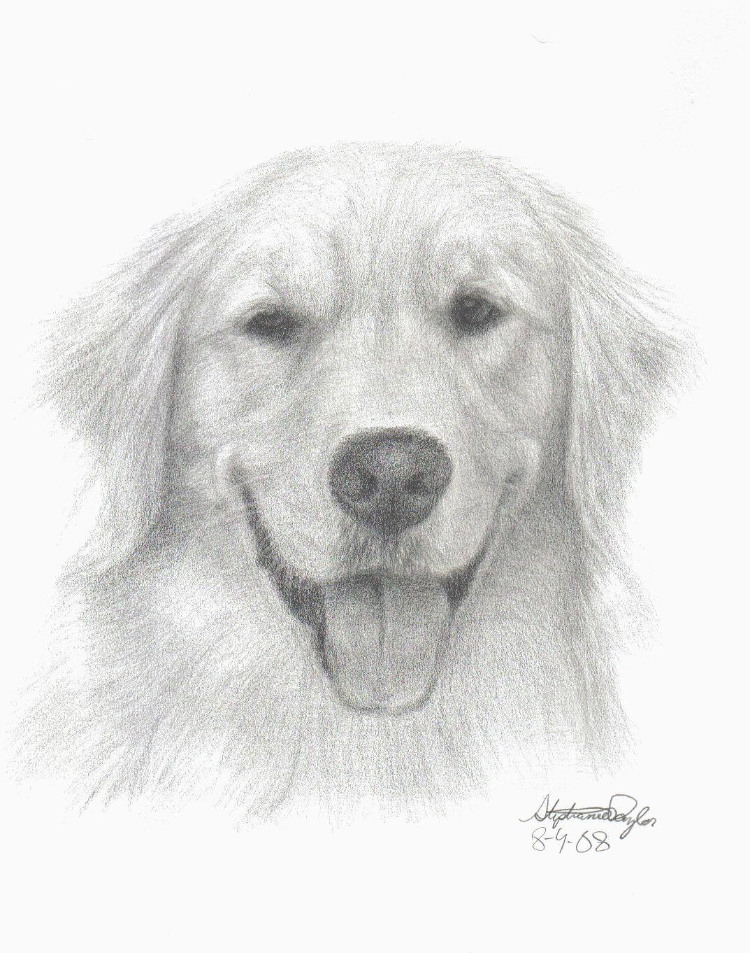 Uncategorized Golden Retriever Drawings draw a golden retriever step by dog life photo step
