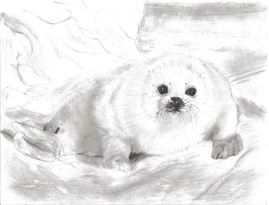 harp seal pup 8 20 06 by stephieeee13445 on deviantart