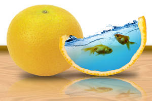 Surreal Fish Swimming in Orange Fruit by SolomonBarroa