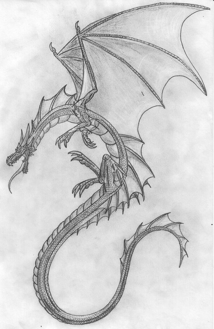 Pencil Dragon by Scatha-the-WormRealistic Dragon Sketches In Pencil