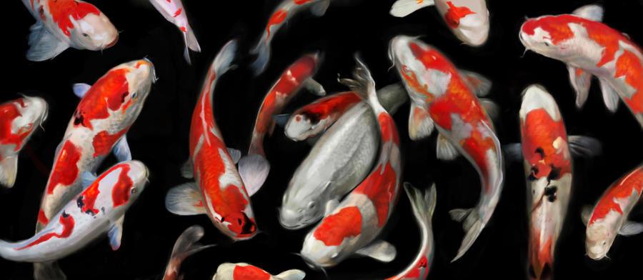 Koi Fish by HisHalfElf