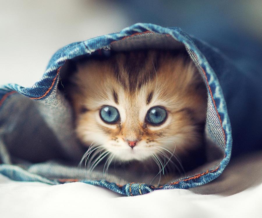 Cute Cat 11 by xXB3AUTIFULXx