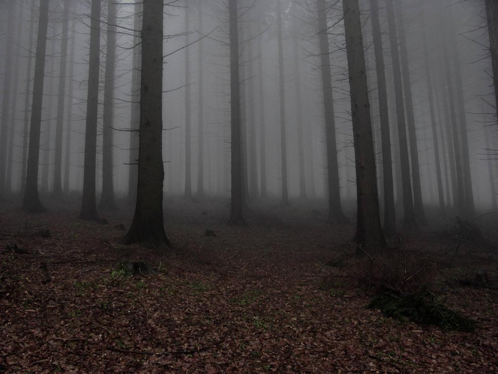 Dark forest by BellissLife