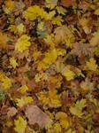 autumn leaves texture by dreamlikestock