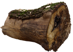 wood log PNG by dreamlikestock