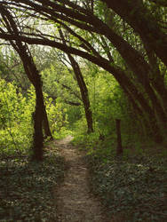 Woods - summer vibes by dreamlikestock