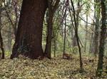 woods by dreamlikestock