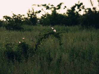 Summer field by dreamlikestock