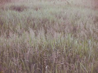 grass field by dreamlikestock