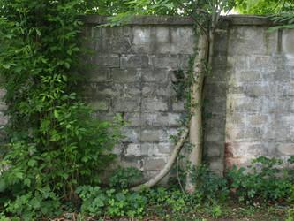 old wall 5 by dreamlikestock