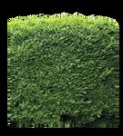 bush PNG
