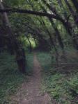 wood trail 10 by dreamlikestock