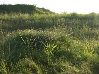 fields by dreamlikestock
