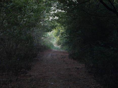road in woods stock