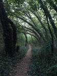 Woods trail stock by dreamlikestock