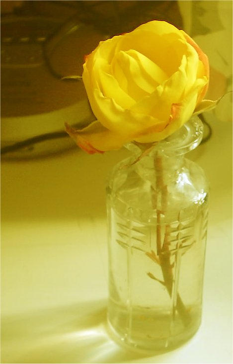 1300 Yellow Rose by brucej