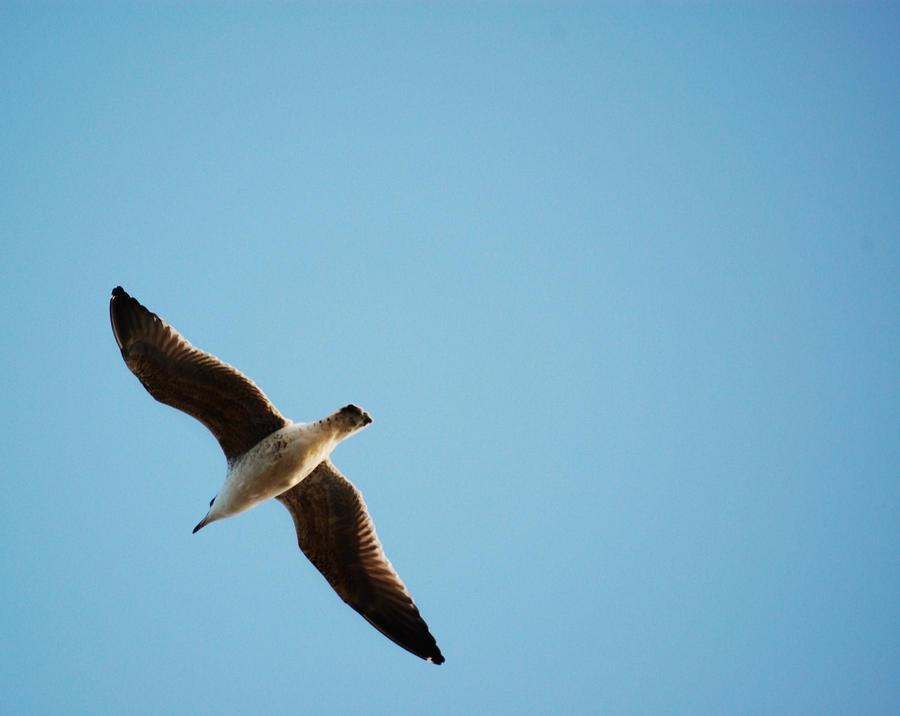 a_sea_gull_by_wandererinwonderland-d4kzhxz.jpg