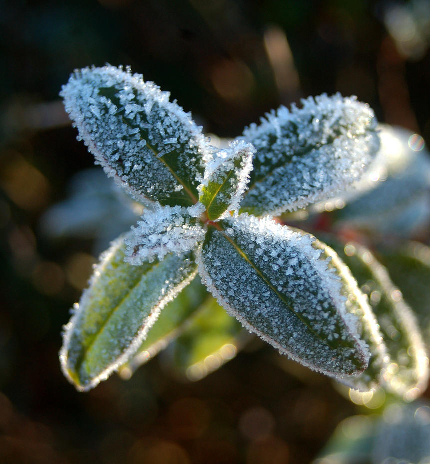 on_a_cold_winter_morning_i_by_wandererinwonderland-d4mivrw.jpg