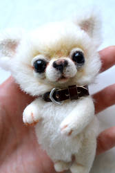 Chihuahua Teddy bear. Adopted