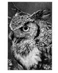 Owl by Murgrona