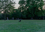 Nevermore II