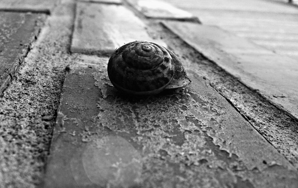 snail 1 by sermyn