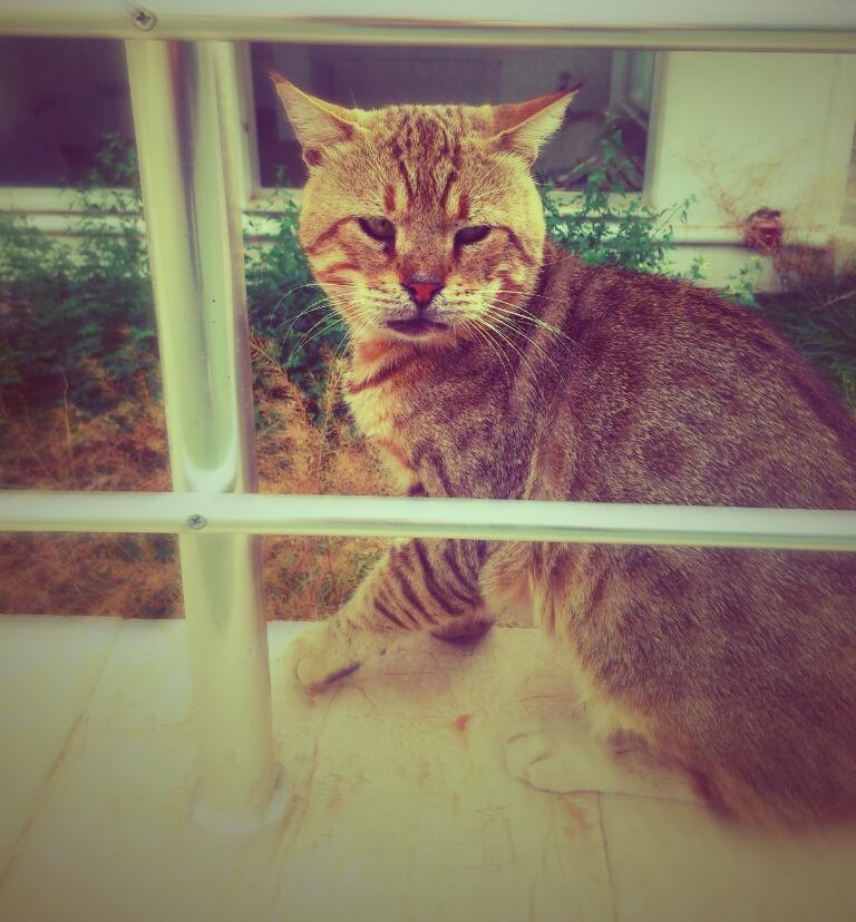 old cat by sermyn