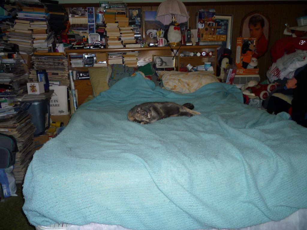 Spot Cat (R.I.P.) by Stallion6