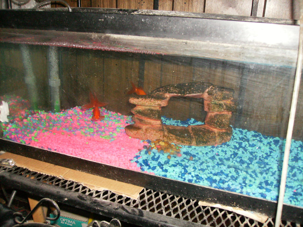 20 gallon fantail goldfish tank by oceanrailroader on for How many fish in a 20 gallon tank